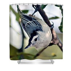 Nuthatch 623 Shower Curtain