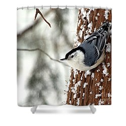 Shower Curtain featuring the photograph Nuthatch In Snow Storm by Paula Guttilla