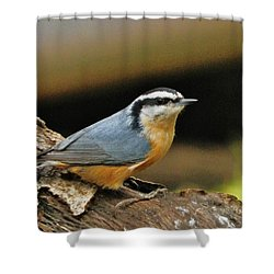 Nuthatch Pose Shower Curtain by VLee Watson