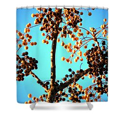 Nuts And Berries Shower Curtain by Matt Harang