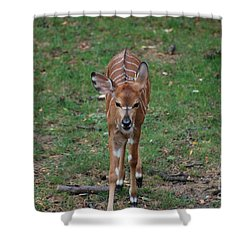 Nyala Shower Curtain by DejaVu Designs