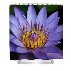 Nymphaea Caerulea  - Blue Egyptian Water Lily - Sacred Blue Water Lily - Nympheas Shower Curtain