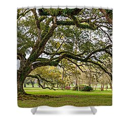 Oak Alley Reverie Shower Curtain by Steve Harrington