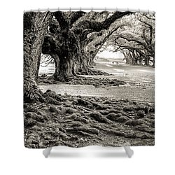 Oak Alley Shower Curtain
