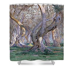 Oak Grove Shower Curtain by Gunnar Widforss