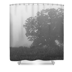 Oak In The Fog Shower Curtain