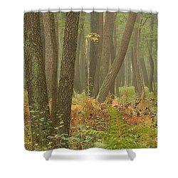 Oak Openings Fog Forest Shower Curtain