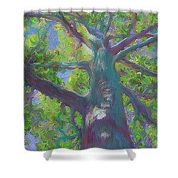 Oak Tree 1 Shower Curtain by Hidden  Mountain