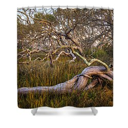 Oak Trees In The Marsh Shower Curtain by Debra and Dave Vanderlaan