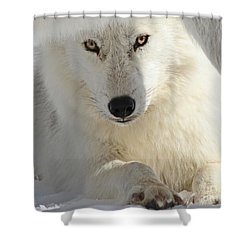 Shower Curtain featuring the photograph Obedience by Heather King