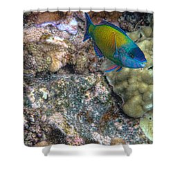Shower Curtain featuring the photograph Ocean Color by Peggy Hughes