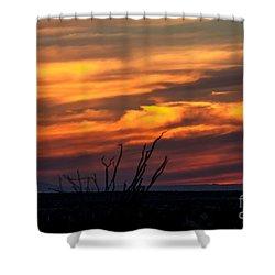 Ocotillo Sunset Shower Curtain by Robert Bales