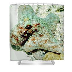 Octopus On The Reef Shower Curtain