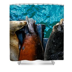 Odd Man Out California Sea Lions Shower Curtain