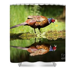 Oh My What A Handsome Pheasant Shower Curtain by Louise Heusinkveld