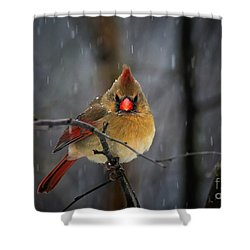 Oh No Not Again Shower Curtain by Lois Bryan