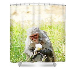 Oil Painting - A Monkey Eating An Ice Cream Shower Curtain