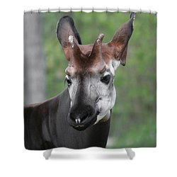 Shower Curtain featuring the photograph Okapi #2 by Judy Whitton