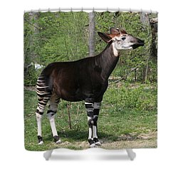Okapi Shower Curtain by Judy Whitton