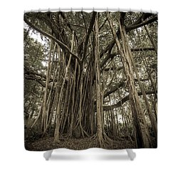 Old Banyan Tree Shower Curtain by Adam Romanowicz