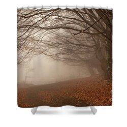 Old Beech Trees In Fog Shower Curtain