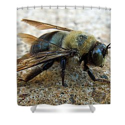 Old Carpenter Bee Shower Curtain