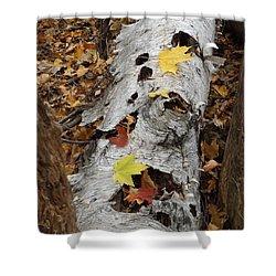 Old Fallen Birch Shower Curtain