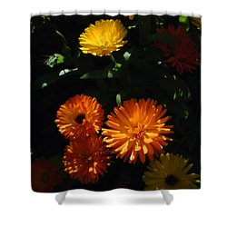 Shower Curtain featuring the photograph Old-fashioned Marigolds by Martin Howard