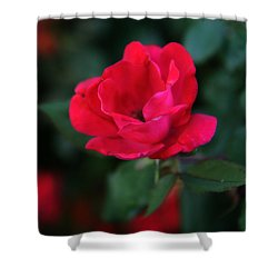 Old Fashioned Rose Shower Curtain