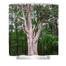 Old Georgia Cedar Shower Curtain