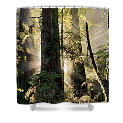 Old Growth Forest Light Shower Curtain
