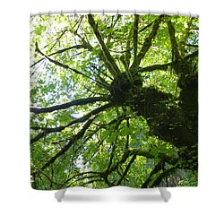 Old Growth Tree In Forest Shower Curtain