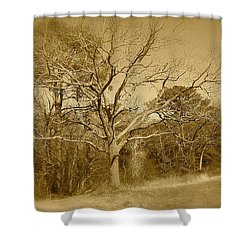 Old Haunted Tree In Sepia Shower Curtain
