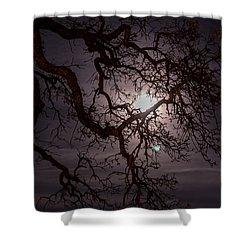 Old Oak Tree Shower Curtain