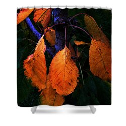 Old Orange Leaves Shower Curtain