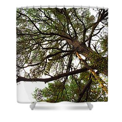 Old Pine Shower Curtain