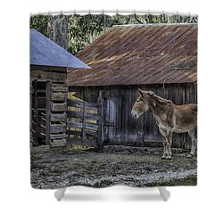 Old Red Mule Shower Curtain by Lynn Palmer
