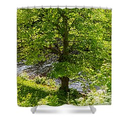 Old Small Leaved Lime At The Riverbank In Oravi Shower Curtain