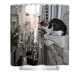 Old Town Alley Cat Shower Curtain by David Nicholls