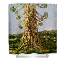 Shower Curtain featuring the painting Old Tree In Spring Light by Felicia Tica