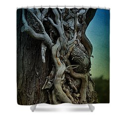 Old Vine Shower Curtain by Mary Machare
