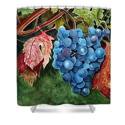 Shower Curtain featuring the painting Old Vine Zinfandel by Debbie Hart