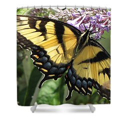 Shower Curtain featuring the photograph Old World Swallowtail by Jennifer Wheatley Wolf