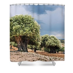 Olive Grove Shower Curtain by Mike Santis