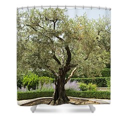 Olive Tree Shower Curtain by Pema Hou
