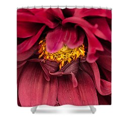Shower Curtain featuring the photograph On Fire by Edgar Laureano