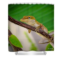 On Guard Squared Shower Curtain by TK Goforth