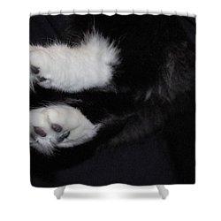 On Little Cat Feet Shower Curtain by Marilyn Wilson