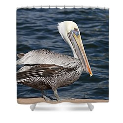 On The Edge - Brown Pelican Shower Curtain by Kim Hojnacki