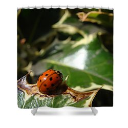 Shower Curtain featuring the photograph On The Edge by Cheryl Hoyle